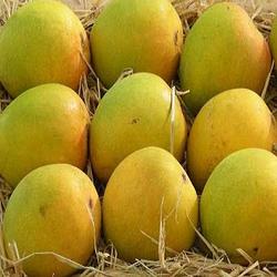 neelam-mangoes-250x250