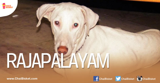 15 Indian Dog Breeds That You Probably Never Knew About