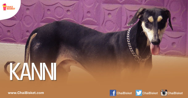 indian pet names for girls