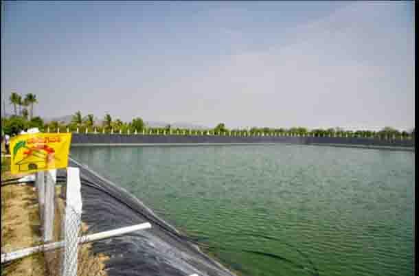 lake FI
