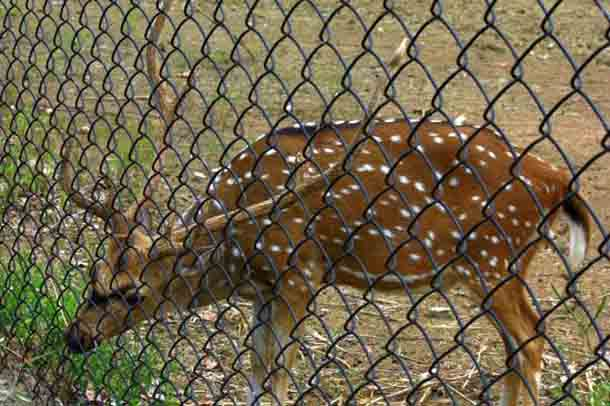 kinnerasani-wildlife (1)
