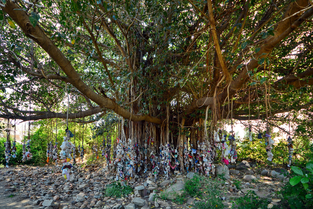 This Banyan Tree In Andhra Pradesh Holds The Guinness ...
